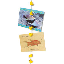 FL-07, Photo rope Ducky 1${dec}5 m, with loop and steel weight, incl. 8 duck magnets